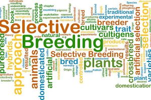 selective breeding wordcloud concept illustration - artificial animal breeding stock pictures, royalty-free photos & images