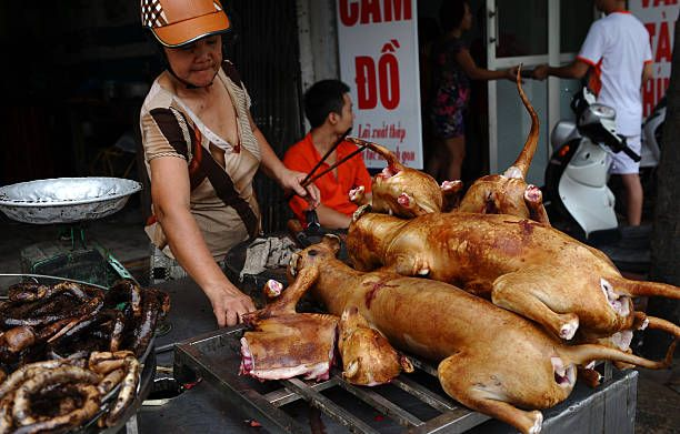 LifestyleVietnamsocietyanimalFEATURE by Tran Thi Minh Ha This photo taken on July 26 2012 shows a vendor selling dog meat on a street in Hanoi Canine...