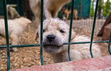 Puppy Mill photos, royalty-free images, graphics, vectors & videos ...