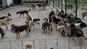 Unwanted and Homeless Dogs Barking Stock Footage Video (100 ...