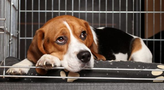 Michigan Lab Stops Pesticide Testing On Beagles | WWJ Newsradio 950