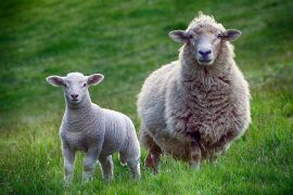 Turn out ewes and lambs to grass as soon as the weather allows ...