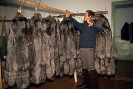 A worker hangs up Silver Fox pelts at the State Farm store room in ...