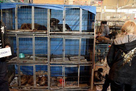 puppıes ın breedıng cages